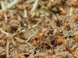 Traitement du bois | Termites | Neature